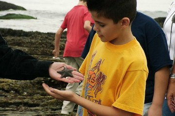 Adult handing student a starfish